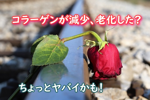 枯れた赤いバラ